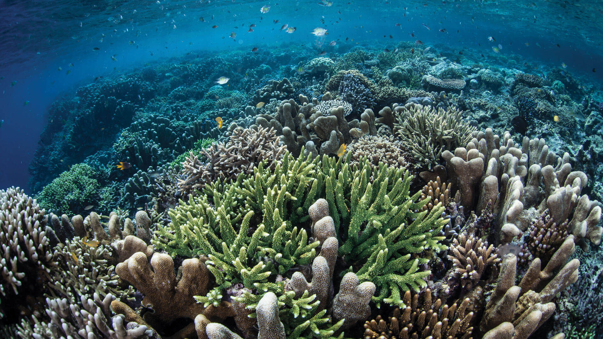 reef ecologic for a better planet