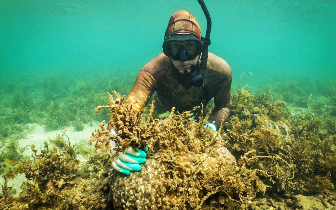 Reef Restoration Workshop Magnetic Island
