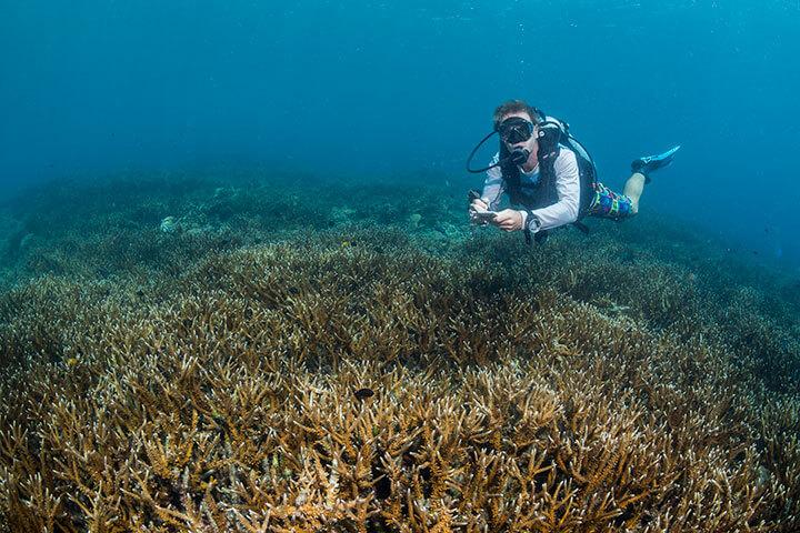 Reef Restoration Workshops