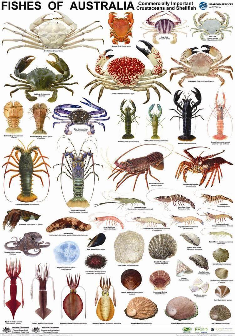 Aninimal Book: Standard for Australian Fish names | Reef Ecologic