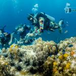 Reef-Check-Nathan-teaching