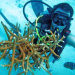 crystaldive.com-diver-with-coral-fragment