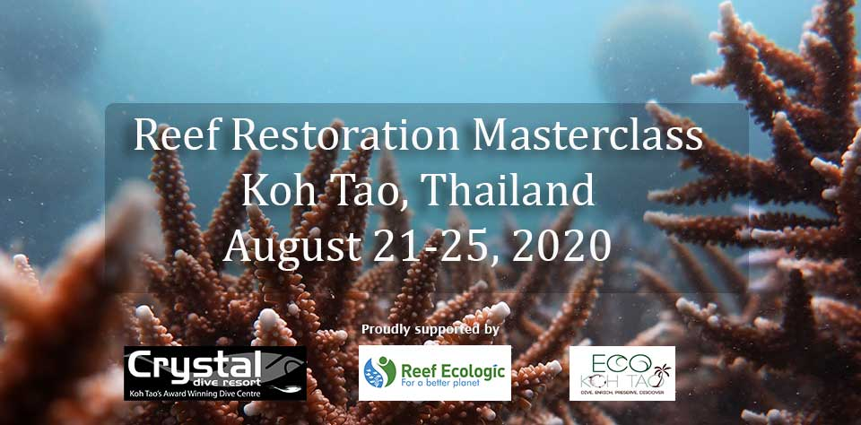 Reef Restoration Masterclass Koh Tao, Thailand