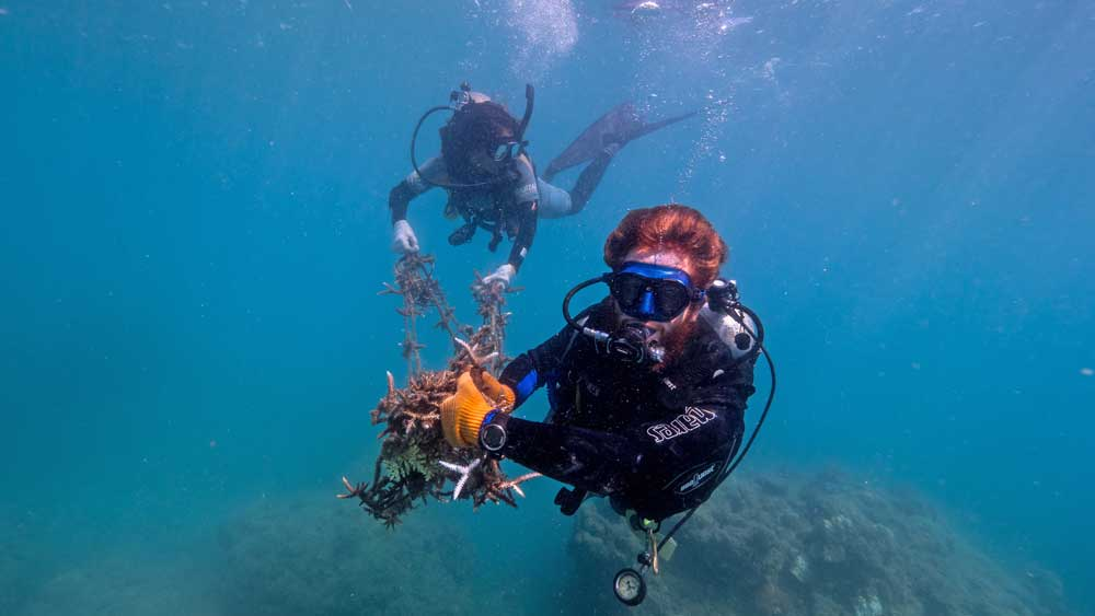 Whitsundays Reef Resilience Project