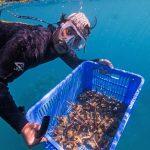 ©-Grumpy-Turtle-Creative-transporting-corals