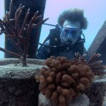 Lash-and-the-corals-outplanted